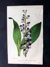 Hogg & Johnson 1866 Hand Col Botanical Print. Brown Winged Orchis 189